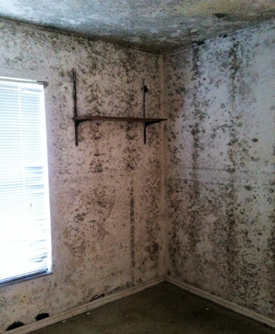 Mold Remediation Flood Damage